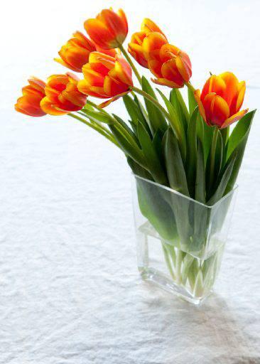 Spring10-tulips