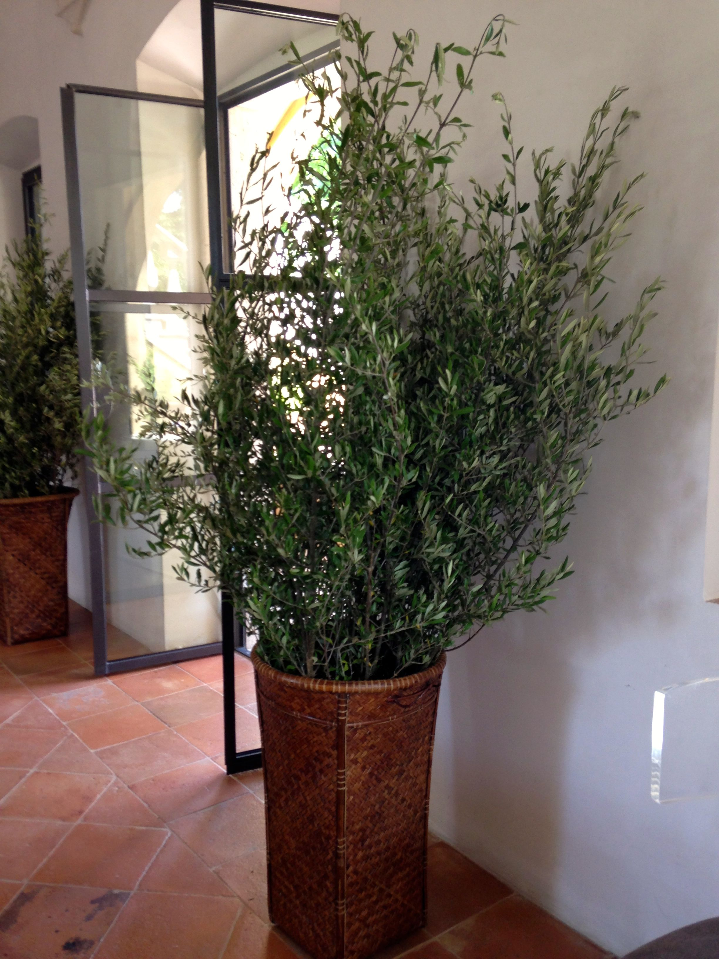 Inside castello di reschio i especially loved the idea that something as simple as cutting off olive branches and putting them in baskets and vases throughout the house made each room reviewsmspy